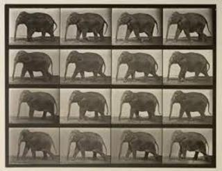 Edward Muybridge: Elephant Walking FLIPBOOK